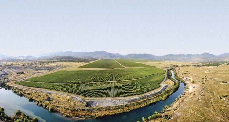 Cemovsko polje winery