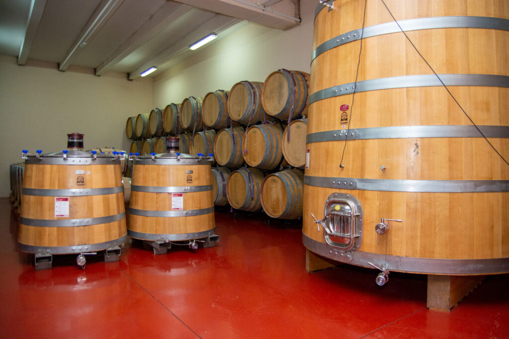 Wine cellar Plantaze 13. JUL